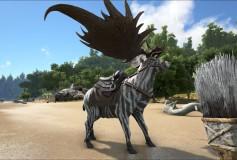 Zebra Stag