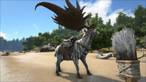 zebrastag