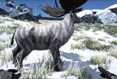 Lilac Zebra