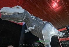 Whitemix Rex