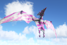 Pink and White Ptera
