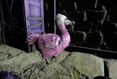 Purple Dodo