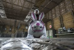 Rabbit Beaver (for Easter Items)