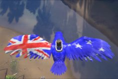 Australian Flag Argent