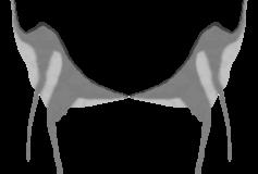 Alien Grey Galli