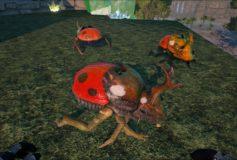 Ladybug Dung Beetle