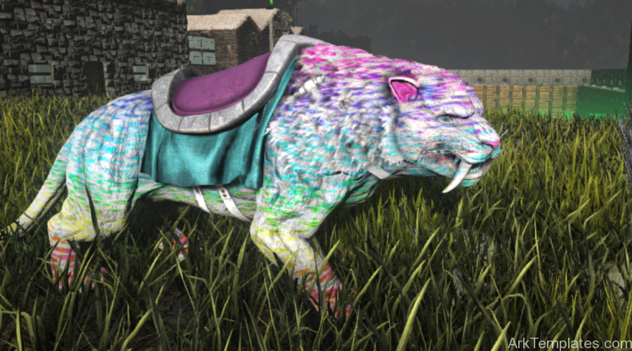 rainbowleopard-900x500