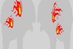Bear Flames