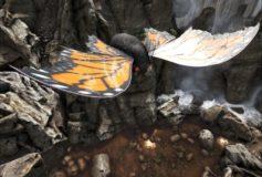 Monarch Butterfly Lymantria