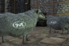 Mutton Sheep Branding